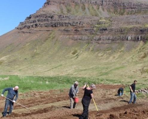 Sett niður í matjurtagarðinn 2016
